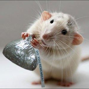 rat-memory